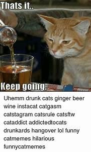 25+ Best Memes About Drunk Cat | Drunk Cat Memes