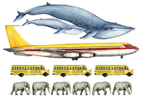 11 Facts About Blue Whales, The Largest Animals Ever Known
