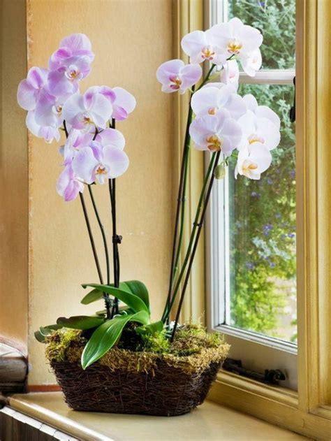 17 meilleures orchid 233 es sur soin pour les orchid 233 es culture des orchid 233 es et jardin