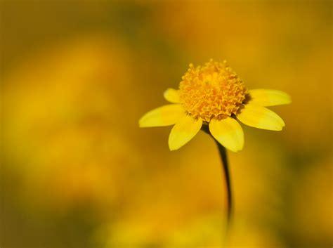 april  cottonwood canyon california wildflower photography