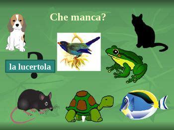 animali animals  italian powerpoint  images