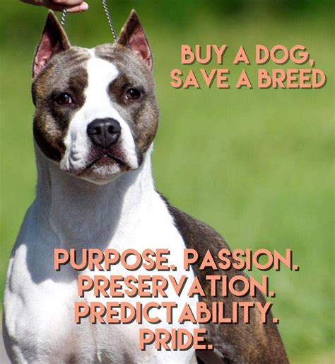 dog dogs purebred