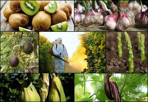fruits veggies    pesticides