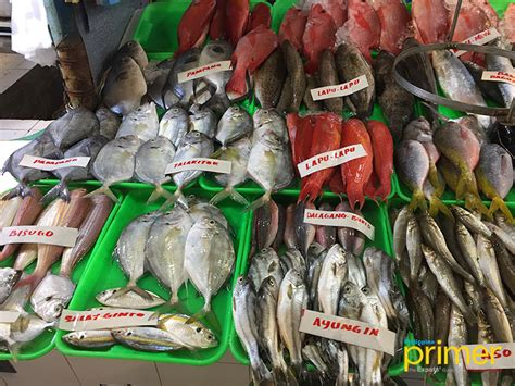 market guide  common fishes   philippines