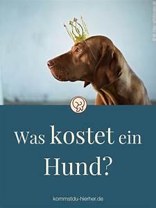 Was Kostet Ein Dachausbau : was kostet ein hund kommst du hierher ~ Lizthompson.info Haus und Dekorationen