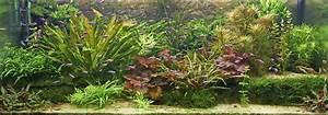 Welche Pflanzen Passen Zu Rosen : kruter pflanzen balkon welche passen zusammen wohndesign ~ Lizthompson.info Haus und Dekorationen