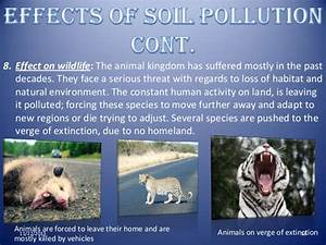 Pics For > Land Pollution Effects On Animals
