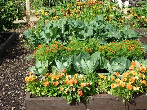 plants gardening garden care archives greenmylife anyone can garden