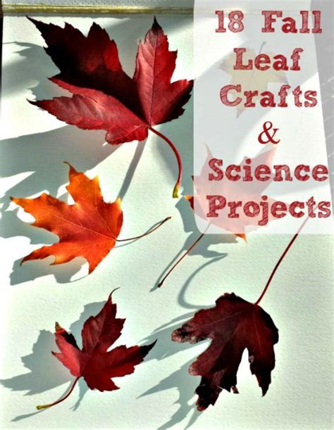 fall science experiments activities  leaves
