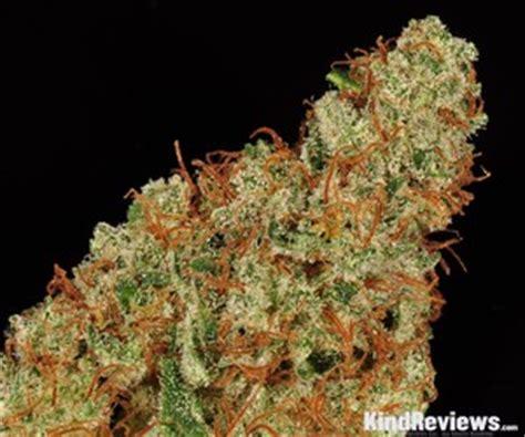 tangerine haze marijuana strain library potguidecom