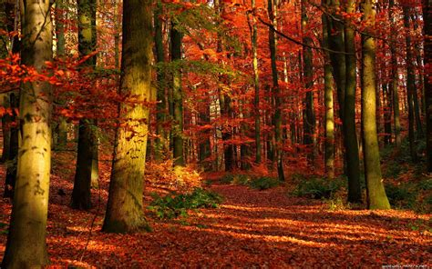 Autumn Wallpapers by Autumn Forest Wallpaper 6976092
