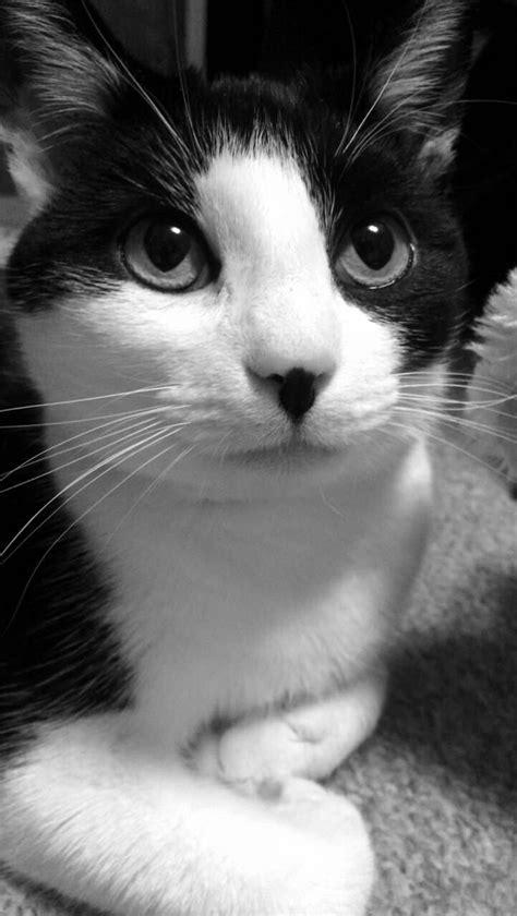 cat nosy tuxedo named fun names cats