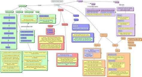 Hormone Concept Map.Images Of Endocrine System Concept Map Answers Golfclub