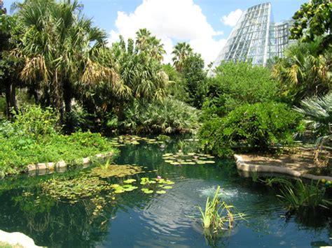 san antonio botanical gardens palm society of south psst