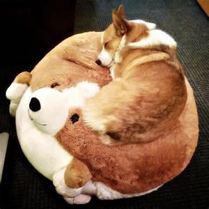 The 25+ best Corgi sleeping ideas on Pinterest | Corgi ...