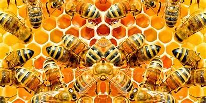Bee Honey Foods Hallucinate Feel Common Psychedelic
