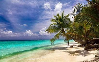 Palm Ocean Trees Beaches Tree Wallpapers Wallpaperup