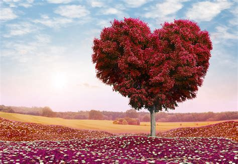 Heart Shaped Tree Valentines Day 4k Wallpaper  Hd Wallpapers