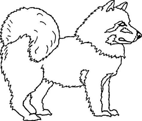 american eskimo dog coloring page supercoloringcom