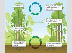 Human Impact and the Biogeochemical Cycle Kanha National