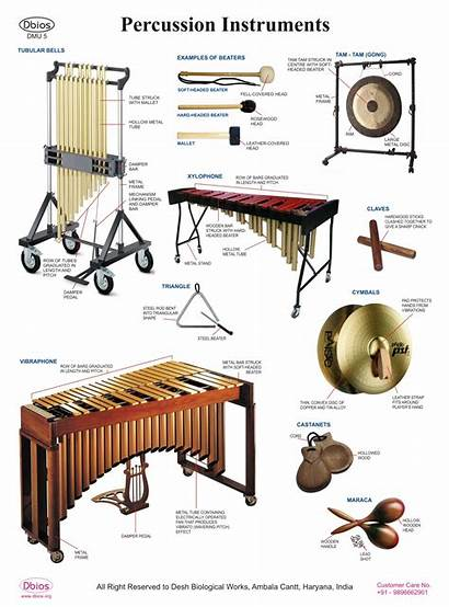 Percussion Instruments Charts Sports Section Dbios Complete