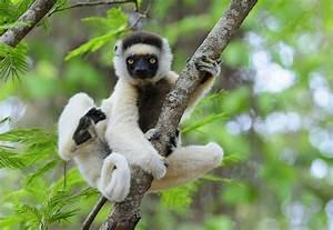 Madagascar National Parks - Madagascar the Country