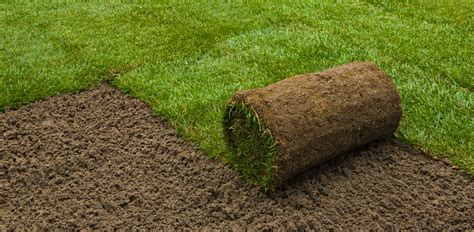 what type of grass is sod aspen valley landscape supply your personal landscape hardscape supplier soil turf