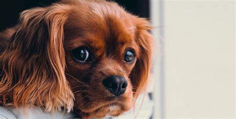 Kā suņi sajūt sliktus cilvēkus? - Noderēs.lv