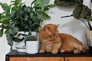 Verkleidung Für Katzen : katzen und pflanzen in einer wohnung geht das berhaupt craftifair ~ Frokenaadalensverden.com Haus und Dekorationen
