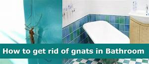 get rid of gnats in my bedroom wwwindiepediaorg With how to get rid of gnats in your bathroom