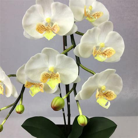 ดอกกล้วยไม้ฟาแลนนอฟซิสสีขาว จัดในกระถางไม้