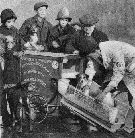 brown brothers dog catcher carrier tricycle