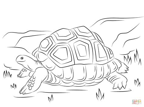cute aldabra giant tortoise coloring page  printable