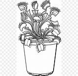Venus Plant Drawing Flytrap Trapping Line sketch template
