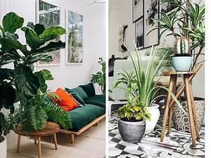 Plante D Intérieur Haute : zoom sur les plantes d 39 int rieur faciles d 39 entretien et ~ Dode.kayakingforconservation.com Idées de Décoration