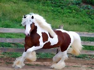 Top 10 Most Beautiful Horses in the World Ever Seen