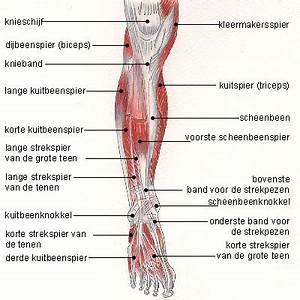 Spierverzuring: 6 tips tegen verzuren van spieren
