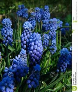 Blaue Blumen Namen. garten blumen blau kunstrasen garten ...