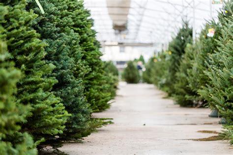 Weihnachtsbaum Länger Frisch by Weihnachtsbaum Pflege Tannenbaum Frisch Halten Womz