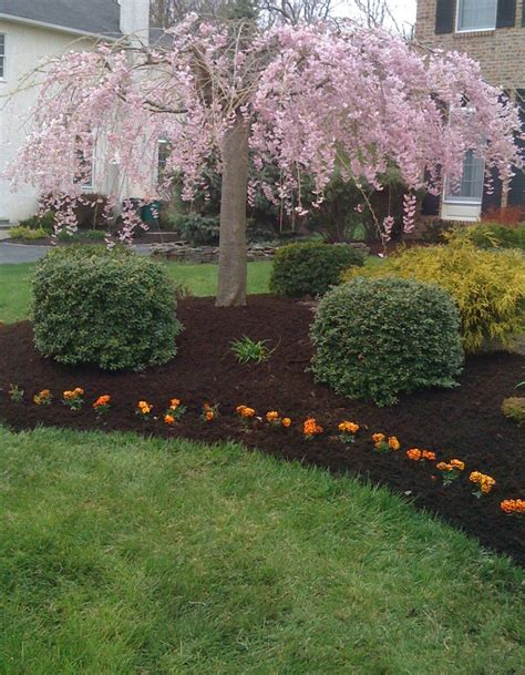 shrub and flower bed design love this for my weeping cherry tree garden pinterest trees cherries and weeping cherry tree