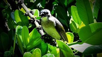 Sunlight Birds Trees Nature