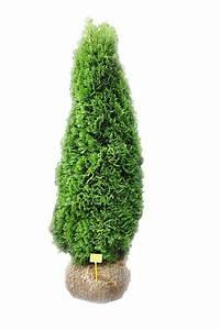 Thuja Smaragd Wachstum : thuja smaragd 80 bis 100cm ~ Michelbontemps.com Haus und Dekorationen