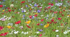 Wiese Mit Blumen : blumenwiese anlegen mein sch ner garten ~ Watch28wear.com Haus und Dekorationen