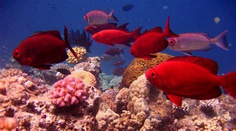 Resultado de imagem para Barreira de Corais
