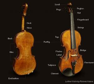 Violin Parts  Definition And Pictures