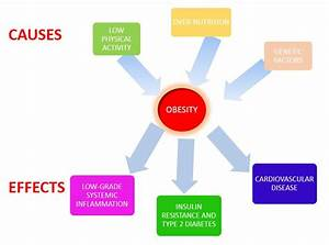 Causes And Effects Of Obesity