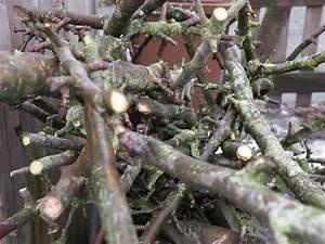 Mein Apfelbaum Anleitung : alten apfelbaum schneiden alten apfelbaum schneiden ~ Lizthompson.info Haus und Dekorationen