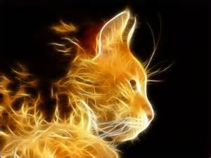 electric cat electric cat cats