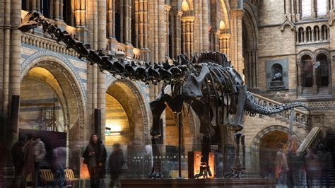 londons natural history museum outsmarted   year  boy conde nast traveler