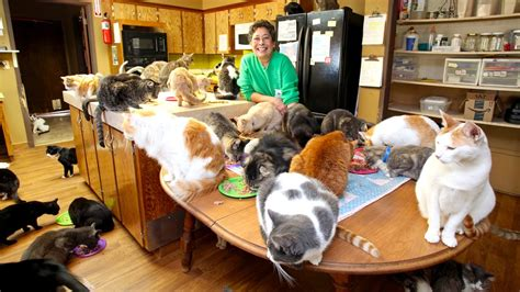 ultimate cat lady woman shares  home